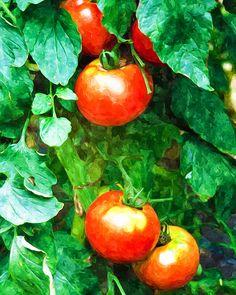 I uploaded new artwork to fineartamerica.com! - 'Tomatoes Close-up' - http://fineartamerica.com/featured/tomatoes-close-up-lanjee-chee.html via @fineartamerica