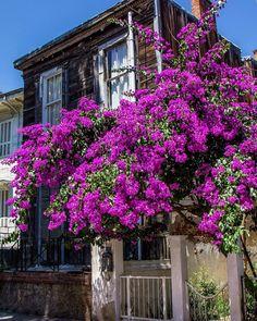 Old house - Buyukada,Istanbul / Photo by Olgu Gök (olgugok)