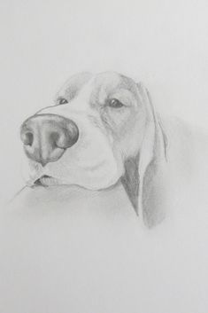 Drawing dogs offers a chance to capture non-human personality and pet portraits with character! Detailed Pet Sketches like these are so rewarding! #drawing #drawingdogs #sketching #detailedsketching #realisticsketching #realistic #bassethound #dogs #cutepets #cuteanimals #pets #portraits #petportraits