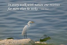 in every walk with nature one receives far more than he seeks - Google Search