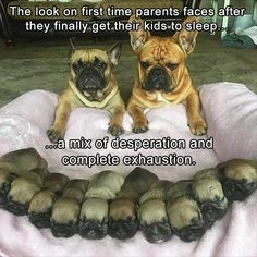 Funny Animal Pictures Of The Day – 23 Pics: