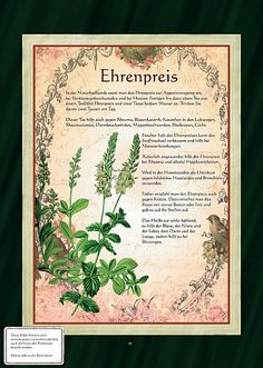Ehrenpreis is a surname. Notable people with the surname include: Healing Herbs, Medicinal Herbs, Greenhouse Gardening, Wild Nature, Cactus Flower, Fantastic Art, Aquaponics, Herbal Medicine, Mother Earth
