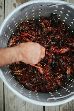 "h-o-r-n-g-r-y: ""Louisiana + Tabasco Tastemakers Trip Sweet Potato Burgers, Country Picnic, Louisiana Crawfish, Green Eggs And Ham, Cajun Recipes, Culinary Arts, How To Dry Basil, Herbs, Eat"