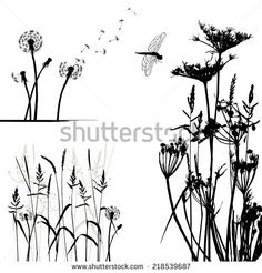 Collection for designers, wild plant vector