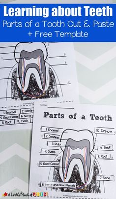 Learning about Teeth: Color and Label Free Printable. Perfect for learning about oral hygeine (kidsactivity printable homeschool firstgrade kindergarten preschool) 437693657531417792 Human Body Activities, Toddler Activities, Dental Health Month, Homeschool Kindergarten, Lessons For Kids, Home Schooling, Worksheets For Kids, Kids Education, Kids Learning