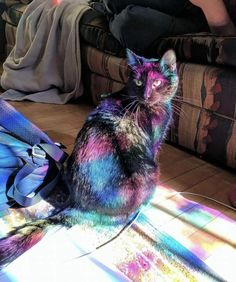 Bathing in the light of a stained glass window by DenMother8 cats kitten catsonweb cute adorable funny sleepy animals nature kitty cutie ca