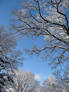 Snow Trees Sky by andycub