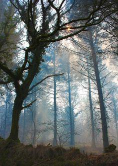 Dartmoor Forest | England (by Joe Cannon)