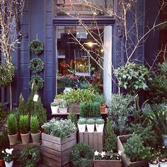 Flower shop / christmas / winter / display / window / rustic / plants
