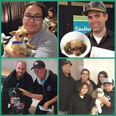 More Home for the Holidays adoptions! Two paws up for (clockwise from left) Lucretia, Bingo, Cowboy, and Ace going home with new pet parents!
