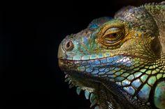 https://flic.kr/p/nRJHyk | Reptile