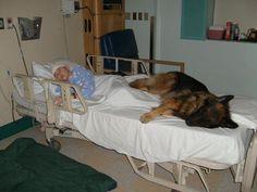 Ce chien donne une garnde preuve d'amour en vers son proriétaire