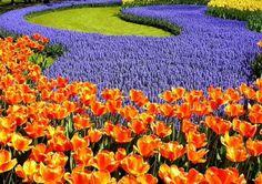 Flowers as art.