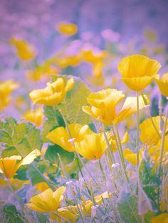 Flowering Trees, Beautiful Gardens, Flower Power, Bloom, Magic, Deviantart, Spring, Ukraine, Flowers