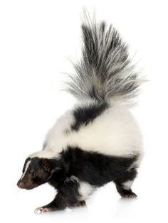 How to get the smell of skunk spray off your dog:  Mix a 32-ounce bottle of hydrogen peroxide with a quarter cup of baking soda and two teaspoons of liquid dish detergent, and apply to your pet's wet coat. Let the solution stay on the dog's hair for five to 10 minutes, then rinse well and repeat, if needed.