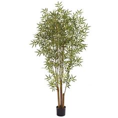 6' Japanese Silk Bamboo Tree by NNatural *** Want additional info? Click on the image.