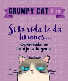 Cats by Patricia Cute Cats And Dogs, I Love Cats, Cats And Kittens, Three Cool Cats, Funny Spanish Memes, Angry Cat, Grumpy Cat, Cat Memes, Memes Humor