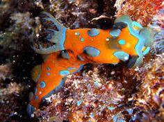 Resultado de imagem para fotos de animais marinhos