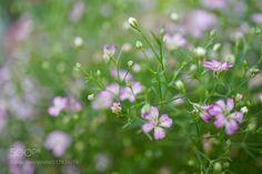 little flowers in summer -