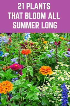 21 Plants That Bloom All Summer Long - - Here is a wide selection of beautiful summer plants which bloom profusely throughout the season without much pampering from you. Garden Yard Ideas, Lawn And Garden, Garden Projects, Backyard Ideas, Outdoor Plants, Garden Plants, Outdoor Gardens, Garden Trees, House Plants
