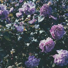 Purple floral  | Satyalila | VSCO Grid