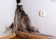 pleseň na stene v byte