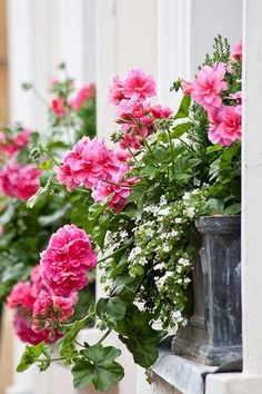 Window boxes with Geranium (Pelargonium) and Bacopa by Stuart Madeley on Flickr (cc)...