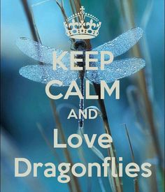 KEEP CALM AND Love Dragonflies. Another original poster design created with the Keep Calm-o-matic. Buy this design or create your own original Keep Calm design now. Dragonfly Quotes, Dragonfly Art, Dragonfly Tattoo, Dragonfly Symbolism, Dragonfly Drawing, Butterfly Art, Keep Calm Posters, Keep Calm Quotes, Bernardo Y Bianca
