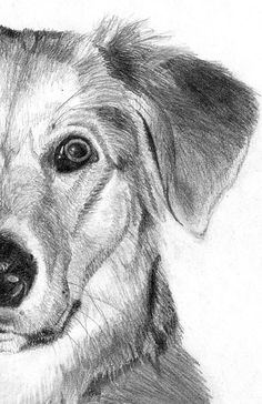 VALUE: this drawing shows value, because it has light and dark spaces that form and tone the dog with creating shadows and contrasts.