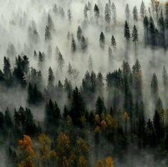 Mountain fog in the trees, in Murphy, NC. Photo by @instagramaniac_jen