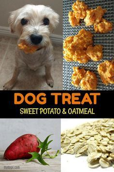 DOG TREAT | sweet potato &oatmeal #homemadedogtreats #healthydogtreats Dog Biscuit Recipes, Dog Treat Recipes, Healthy Dog Treats, Dog Food Recipes, Healthy Recipes, Homemade Dog Cookies, Homemade Dog Food, Sweet Potato Dog Treats, Doggie Treats