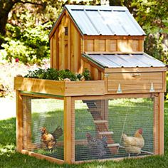 *NOTE*  I love this coop design.  Not only do the chickens have access to the ground (free range), but notice the raised garden bed on top growing greens for them to eat making healthier eggs.  I would make the run shorter and longer w/wheels.