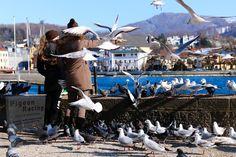 Homing Pigeons, Opera House, Lost, Racing, Travel, Running, Viajes, Auto Racing, Destinations