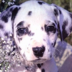 This looks just like Abbie when she was a puppy!