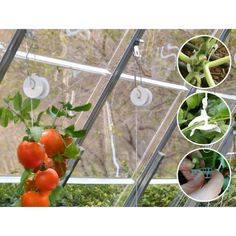 Easily hang your plants and vine crops and protect their delicate stems from breakage. Allow the proper amount of sunlight to shine all over your hanging plants. Our Trellising Kit works with all Palram Greenhouses, quick and simple to operate and a wonderful additional accessory for your gardening projects. Easily hang your plants and vine cropsAssures accurate height control of lengthy plantsQuick and simple to operate Included Components – 6 Roller hooks spool with 25m twine– 3 Types of… Greenhouses, Hanging Plants, Stems, Garden Projects, Twine, Sunlight, Hooks, Delicate, Gardening