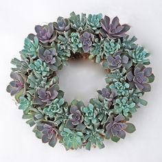Echeveria Living Wreath - Flora Pacifica, family owned and operated, located on the Oregon Coast, grows a wide variety of cut flowers and herbs. - http://www.florapacifica.com