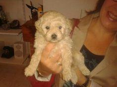 My pretty puppy Leia.