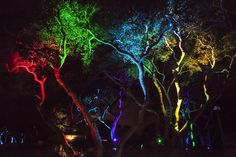 Our tree lights at Cali Roots Festival. Contact Bay Area Event Lights to light up your special events! Event Lighting, Tree Lighting, Led Tree, Weeping Willow, Cherry Blossom Tree, Color Changing Led, Bay Area, Light Up, Color Change