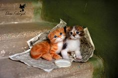 Super cute needle felted kittens by one of the greats - Elena Fedoryak