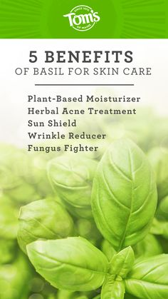 From the basil plant's leaves and flowers to its essence as an oil, it may offer a variety of benefits to help protect, clear, and clean your skin, so you can show off that glam glow! Facial Cream, Skin Cream, Benefits Of Basil, Fungal Infection Skin, Basil Essential Oil, Basil Plant, Natural Toothpaste, How To Treat Acne
