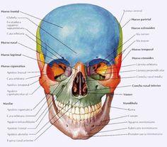 Huesos de la cara