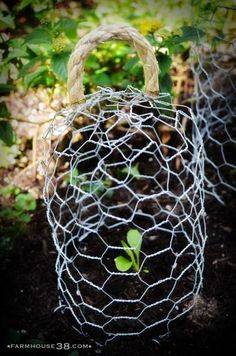 Protect your young plans with these adorable chicken wire cloches (or plant jails, as I call them). They are are an easy craft project that have been cropping up all over the interwebs lately. Garden Oasis, Lawn And Garden, Garden Cloche, City Farm, Garden Boxes, Garden Ideas, Planting Vegetables, Vegetable Garden, Square Foot Gardening