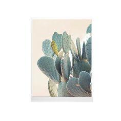 Desierto información grandes Cactus bellas por WilderCalifornia