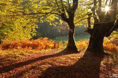 Irati forest - by ebmfoto.com