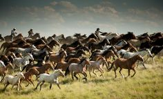 Blackfeet Horse Drive Photo by Donnie Sexton — National Geographic Your Shot
