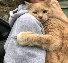This little bastard hugging his mum after being lost for 5 hours - [Sleepy Cats] - Katzen Bilder Kittens Cutest, Cats And Kittens, Cute Cats, Funny Cats, Kittens Meowing, Cute Baby Animals, Animals And Pets, Funny Animals, Animals Images