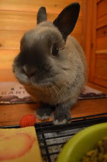 Eating a raspberry for the first time.
