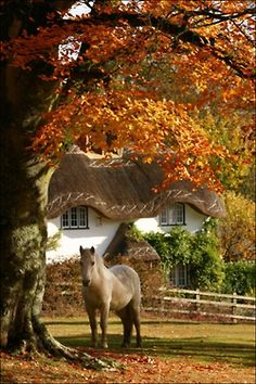 Autumn in the country...what a beautiful horse, and what about that roof on that cute cottage!