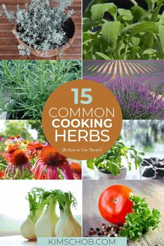 If you're ready to take your cooking skills to the next level, these 15 common cooking herbs are the way to go! They'll add tons of flavor to every dish. // Kim Schob -- #culinaryherbs #kitchentips Cooking Herbs, Kitchen Hacks, Growing Seeds, Herb Butter, Recipe Boards, Dishes, Fennel, Stew, Good Food