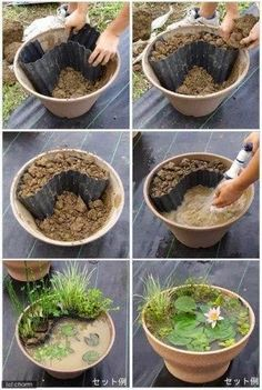 How to make a miniature pond in a pot - Add some goldfish and you won't have mosquito worries. Use gravel instead of the dirt and the water will be clearer...
